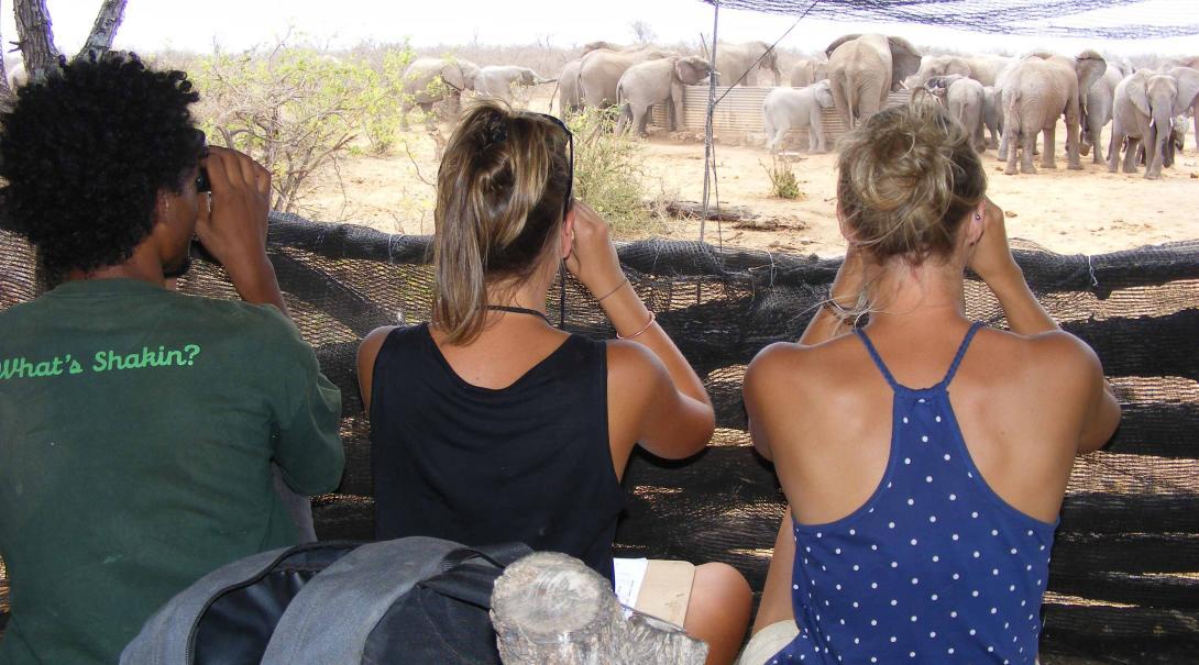 High school volunteers doing elephants surveys.
